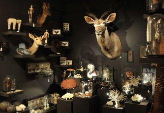 la taxidermie et l art contemporain arts et technologies contemporaines. Black Bedroom Furniture Sets. Home Design Ideas